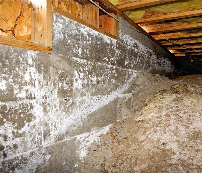 mold in crawl space.