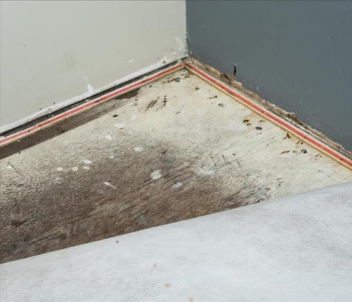 carpet damage from water