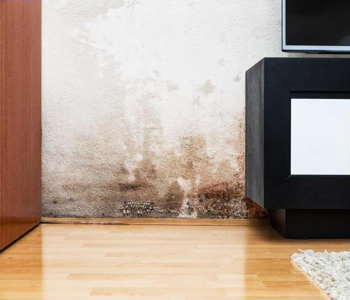 Water Damage The Advantages Of Deodorization After Your Belmont Home Experiences A Water Damage Emergency